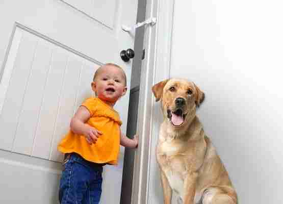 Door Buddy - keep dogs and babies out