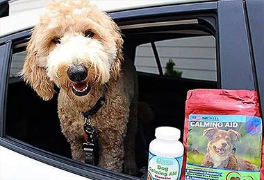Penny the Ozark Doodle - Dog Calming Aid Chewables & Calming Aid Treats