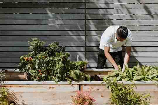 benefits of home gardening