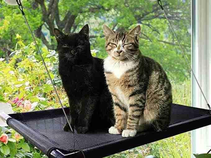 Best Cat Window Hammock