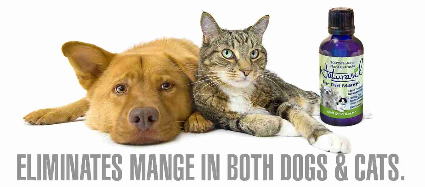 Naturasil Pet Mange Treatment is safe for dogs and cats.