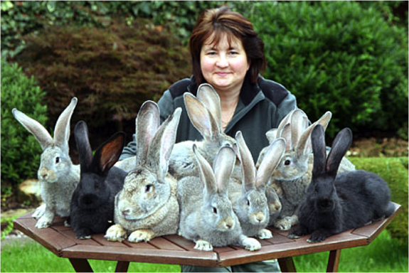Woman with pet rabbits on table