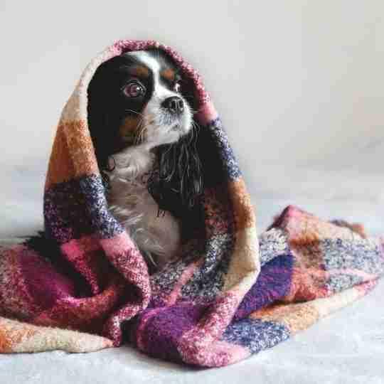 Blog image - new baby and dog