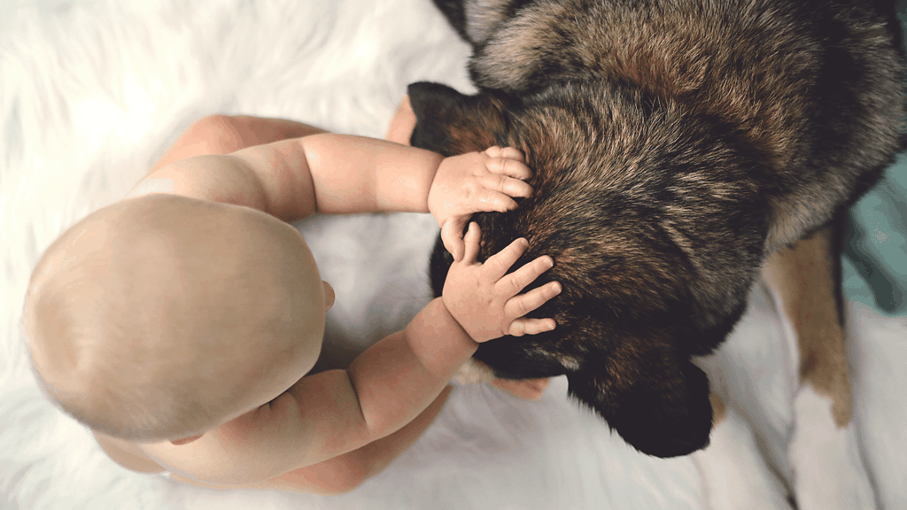 introducing dogs to babies - Blog banner