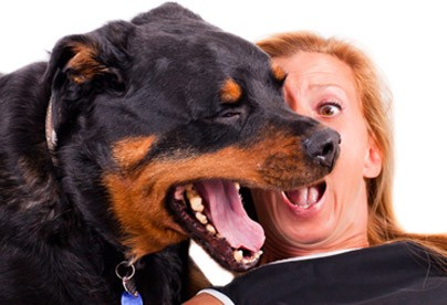 Fresh Breath Oral Care for Dogs and Cats