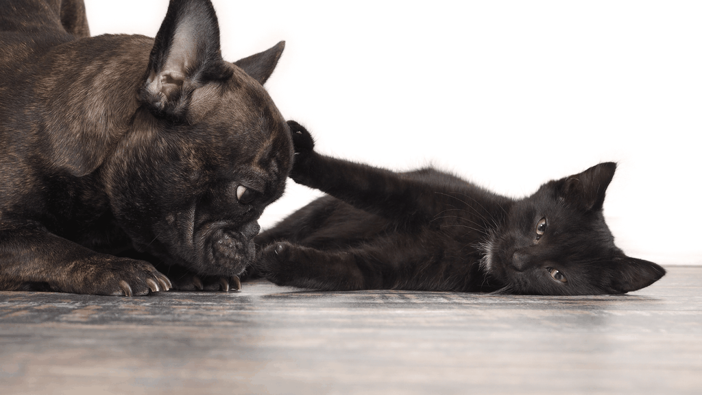 cats and dogs fighting - Blog banner