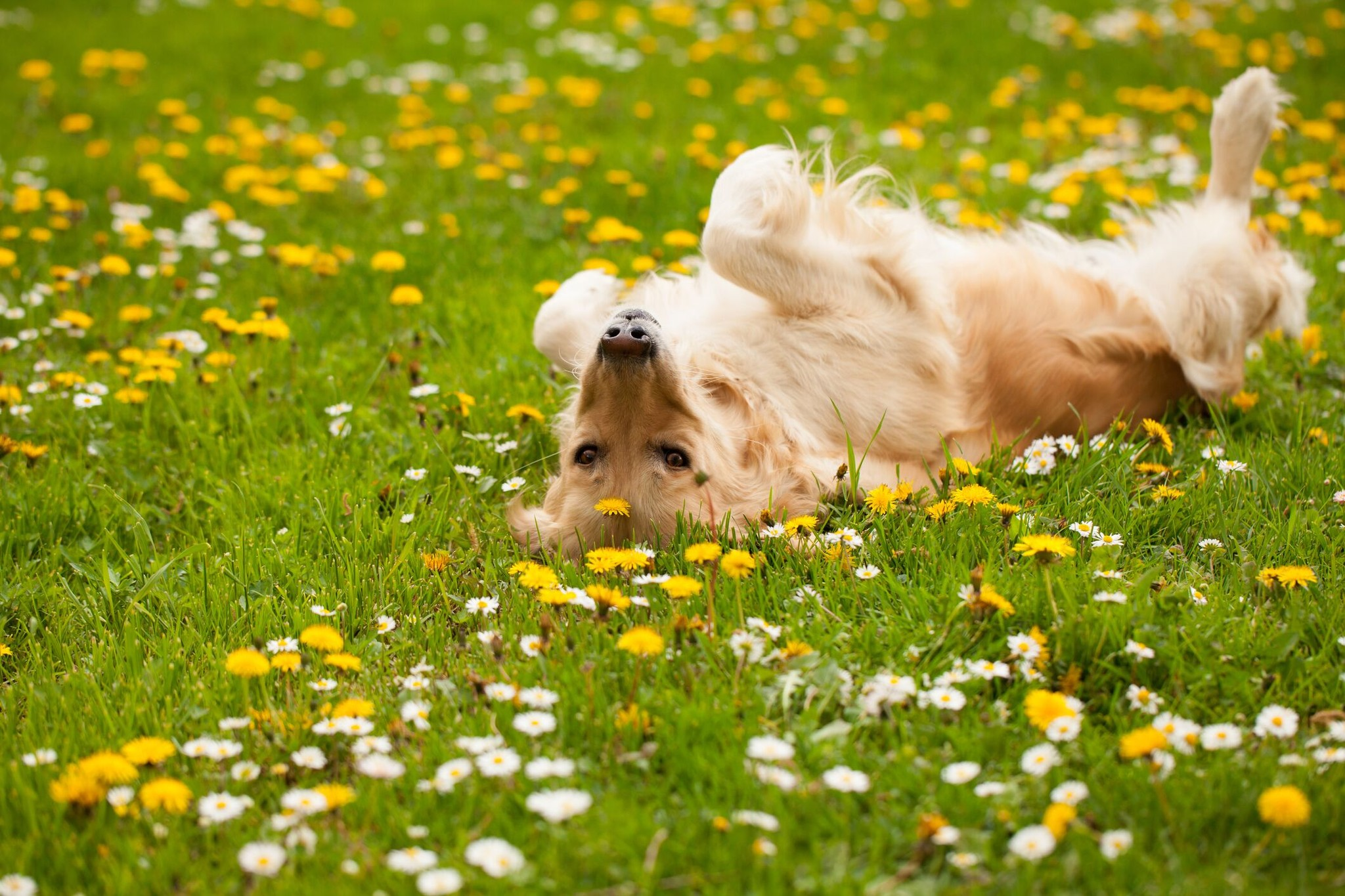 4 Things to Do to Get Your Pet Ready for Spring