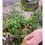 Teraganix terakashi bokashi Natural Organic Fertilizer 2 lb em bokashi photo 2