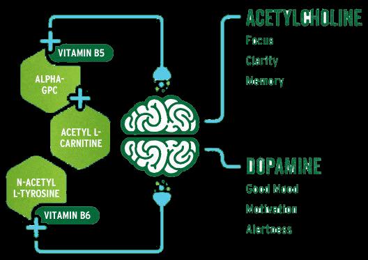 brainjuice-acetylcholine-dopamine