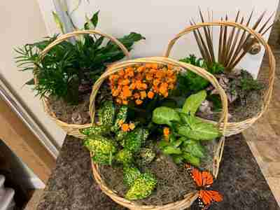 Three baskets filled with flowers and plants
