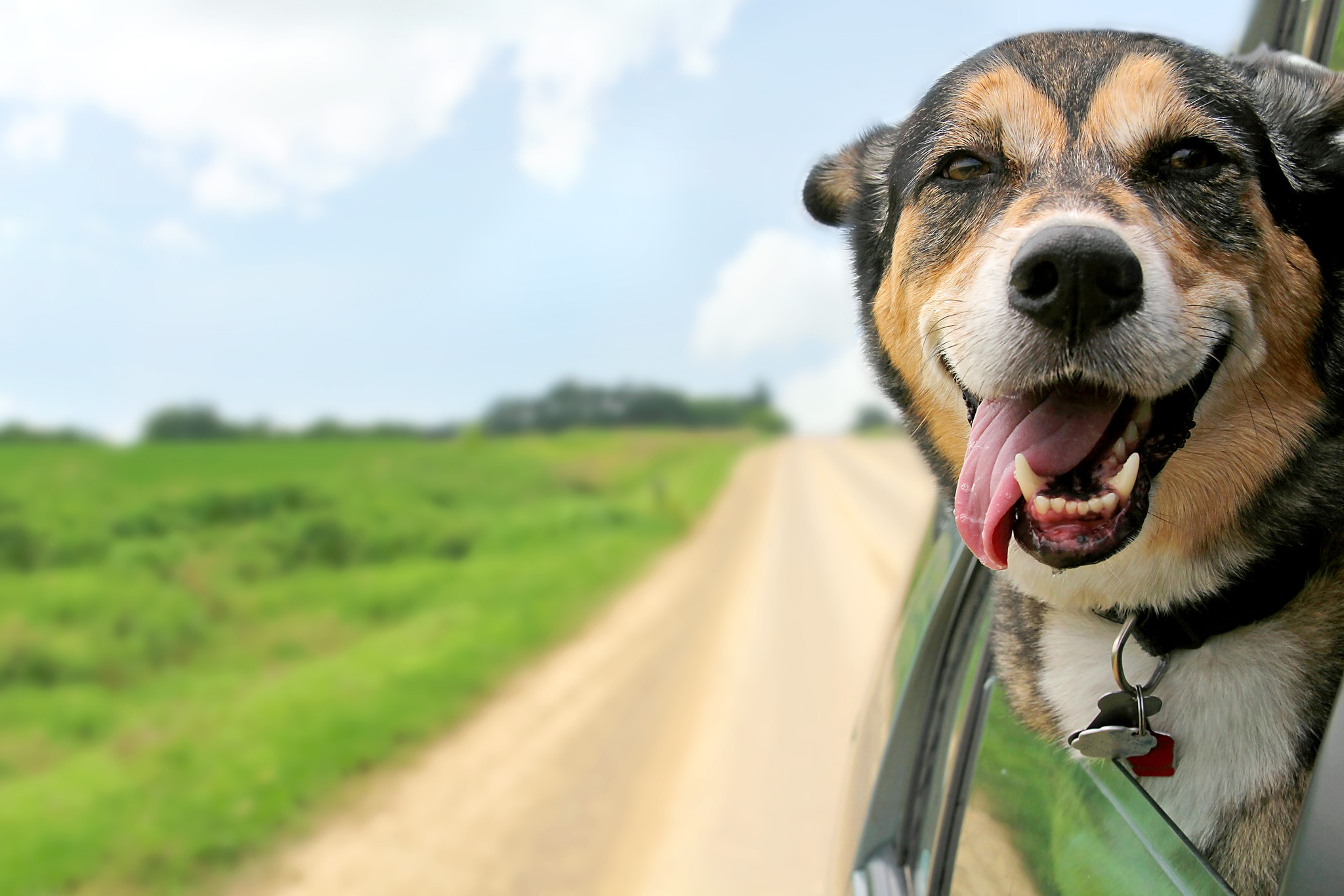 How to Safely Travel With Your Dog in the Car