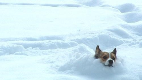 Do Dogs Need Foot Protection in the Snow?