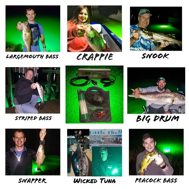 Green-Fishing-Light-Fish
