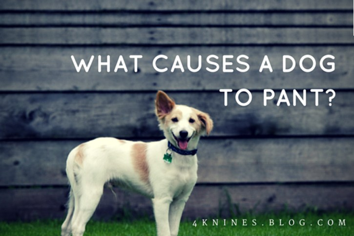 What Causes a Dog to Pant?