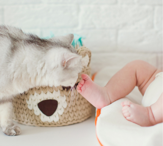 Living with Cats and Babies - Blog Image