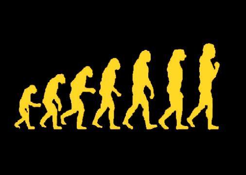 evolution punaise de lit