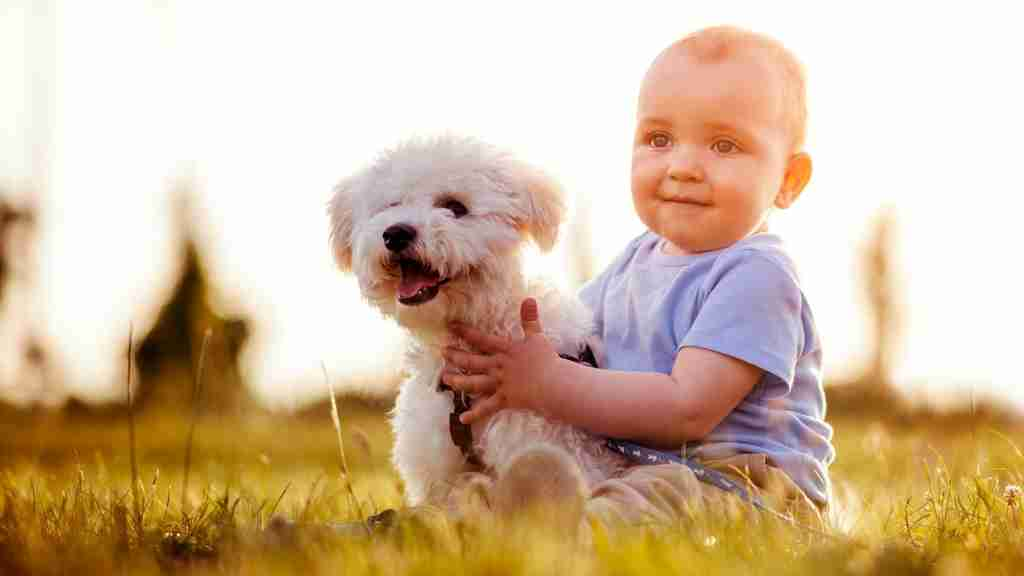 dogs and babies - cover image