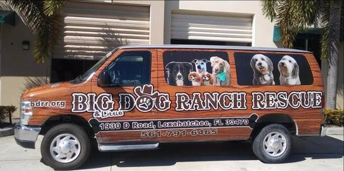 October 2019 Charity Spotlight: Big Dog Ranch Rescue
