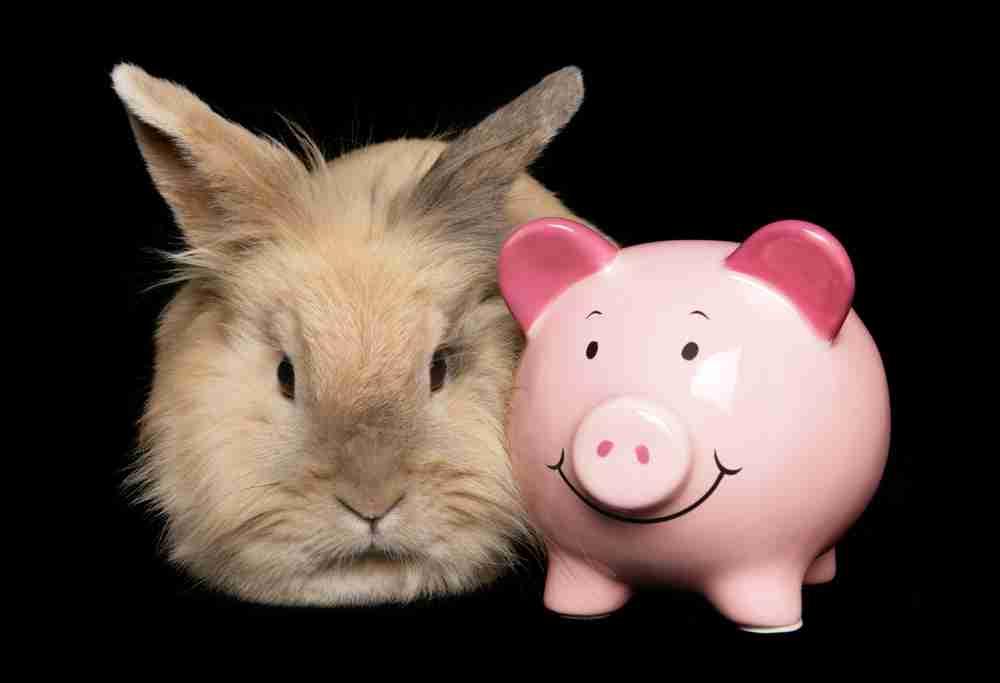 rabbit and piggy bank