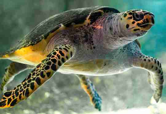 National Save The Sea Turtle Foundation