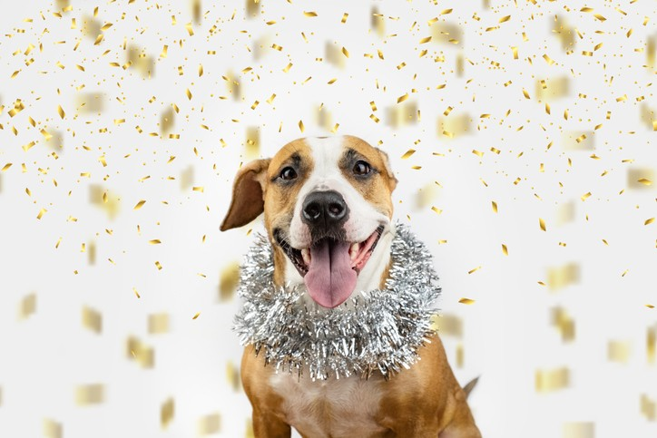 New Year's Checklist for Our Dogs' Happiness & Health