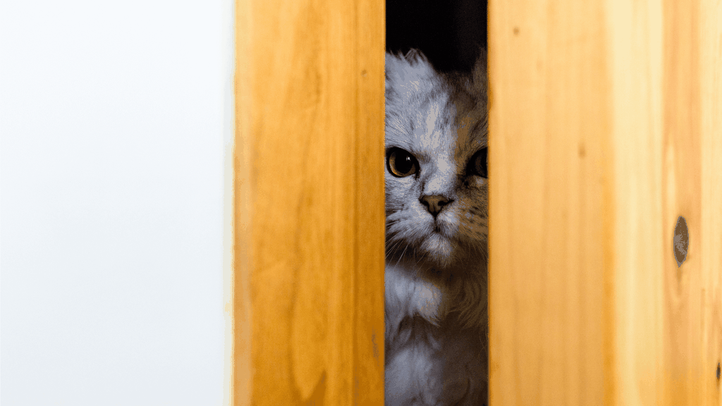 why do cats hate closed doors - cover image