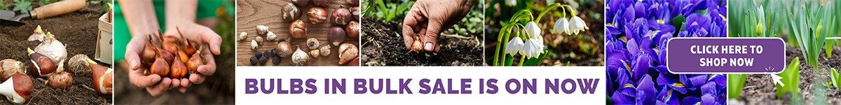 Buy Bulbs from Power Planter and get them at the cheapest prices in Australia. Perfect for Landscaping and maintenance jobs.