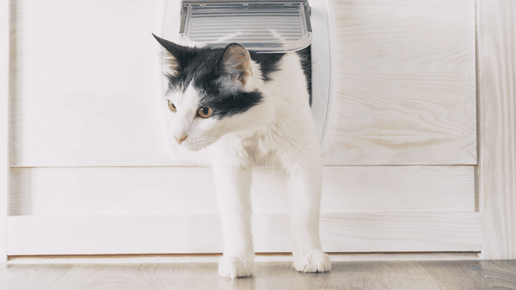 cat door alternative to to keep baby out of litter box - blog image