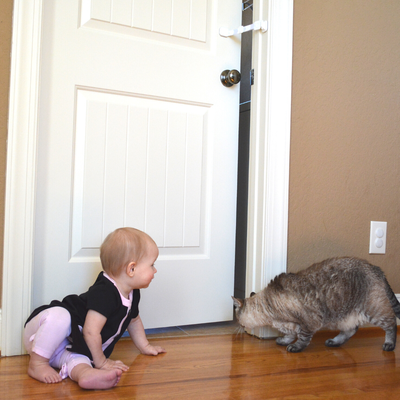 child proof litter box and cat food