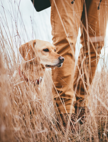 HUNTING DOG WITH OWNER
