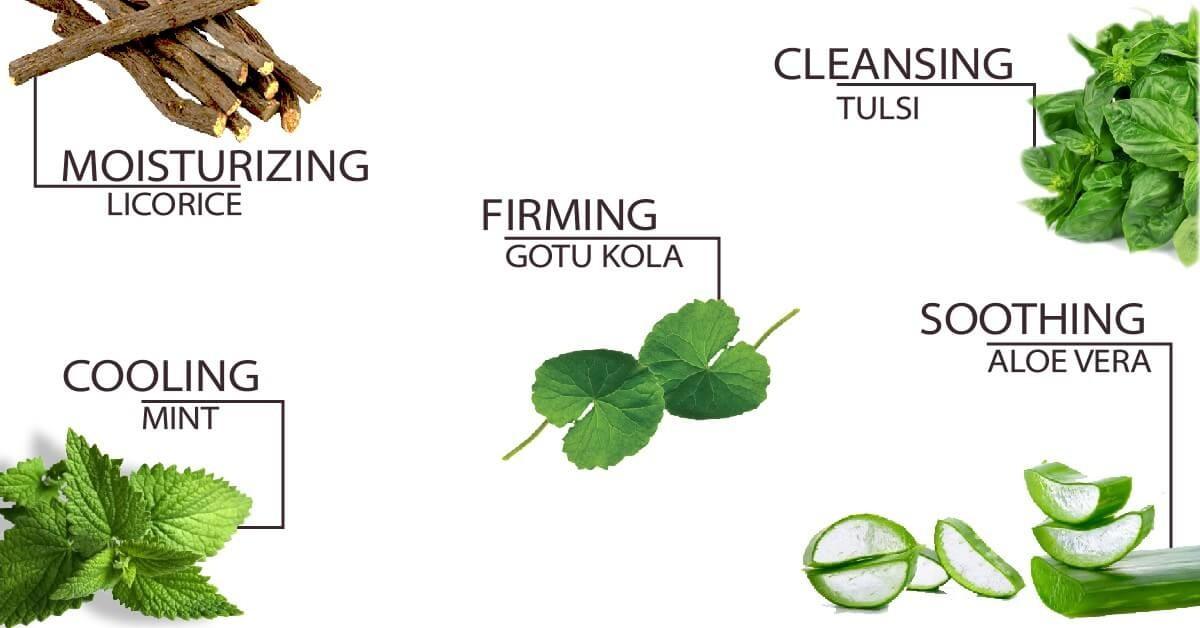 Ingredients in Tulsi Mint Tonifying Eye Gel