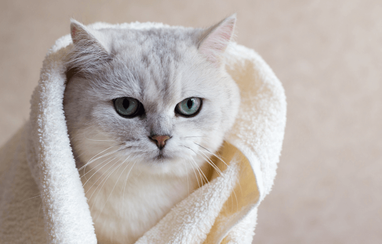 The Door Buddy - Blog - Tips for Cat Owners