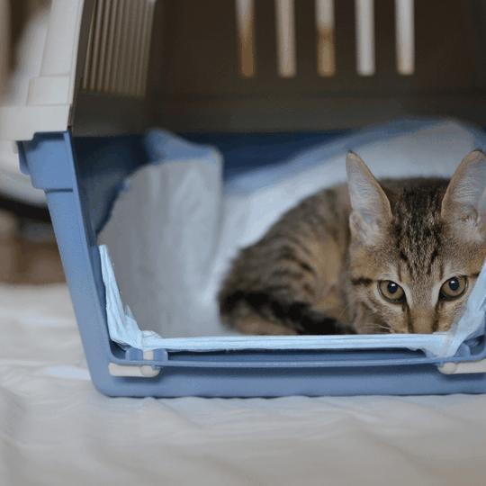 cat carrier training - blog image