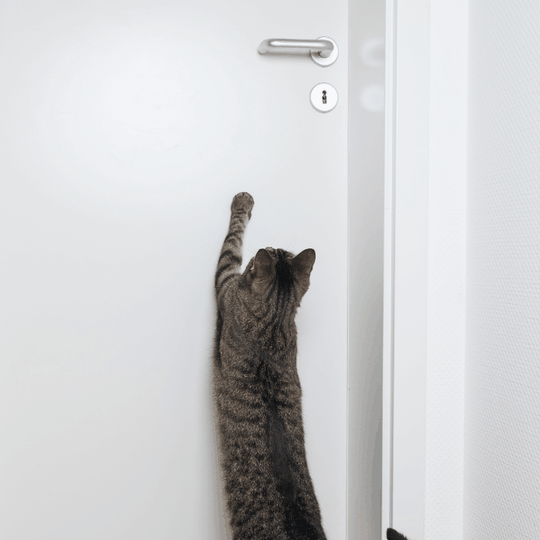 why do cats hate closed doors - blog image