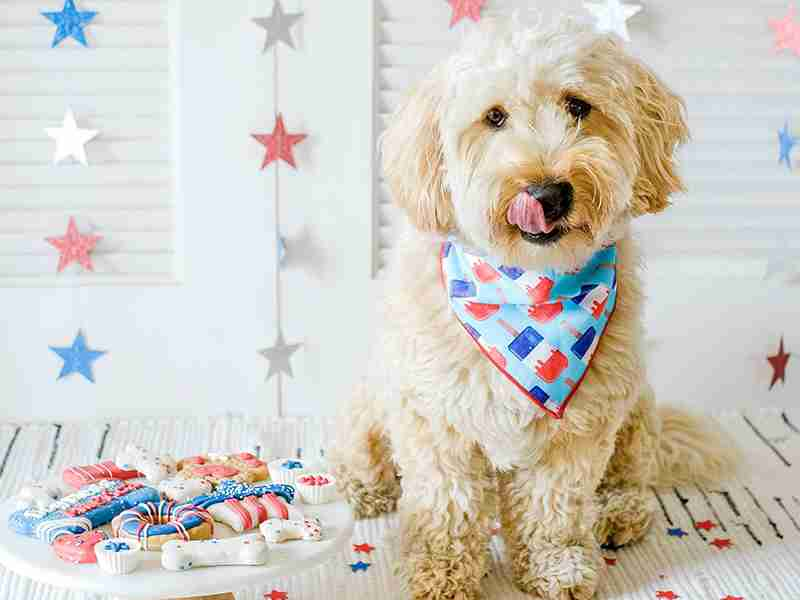 Party In The USA with These 4th of July Pet Party Ideas