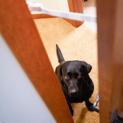The Door Buddy - Blog - Dog proof cat food.