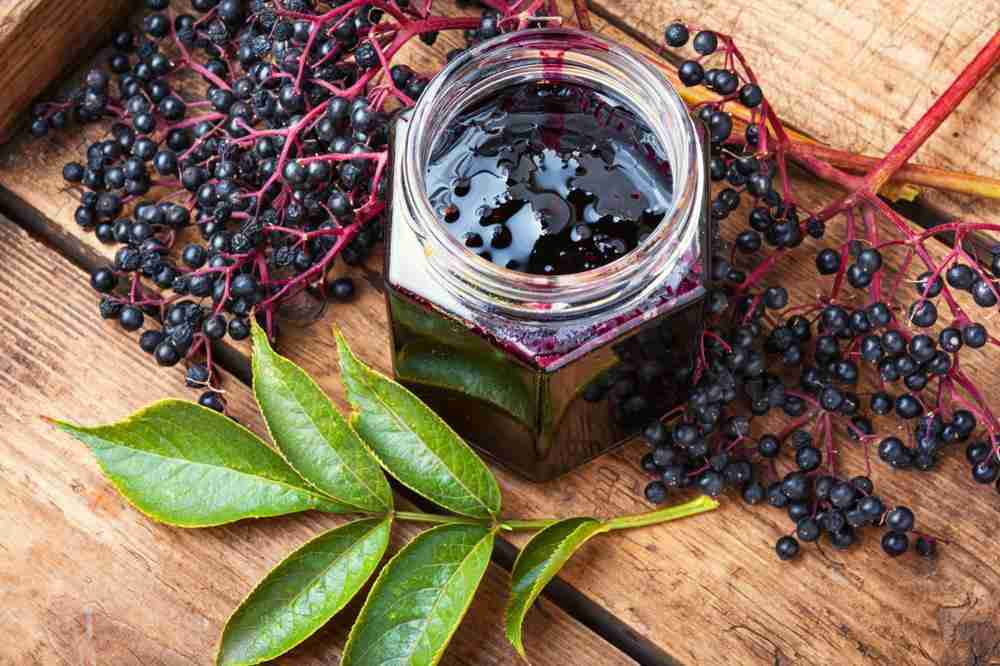 Elderberry boosts your immune system