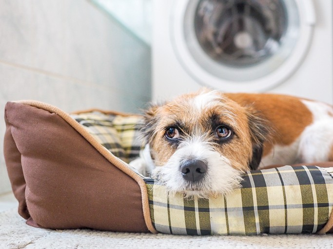 How to Ease Canine Stress