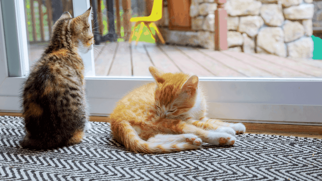 cats and closed doors - Blog banner