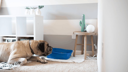 how to keep dog out of litter box - blog image