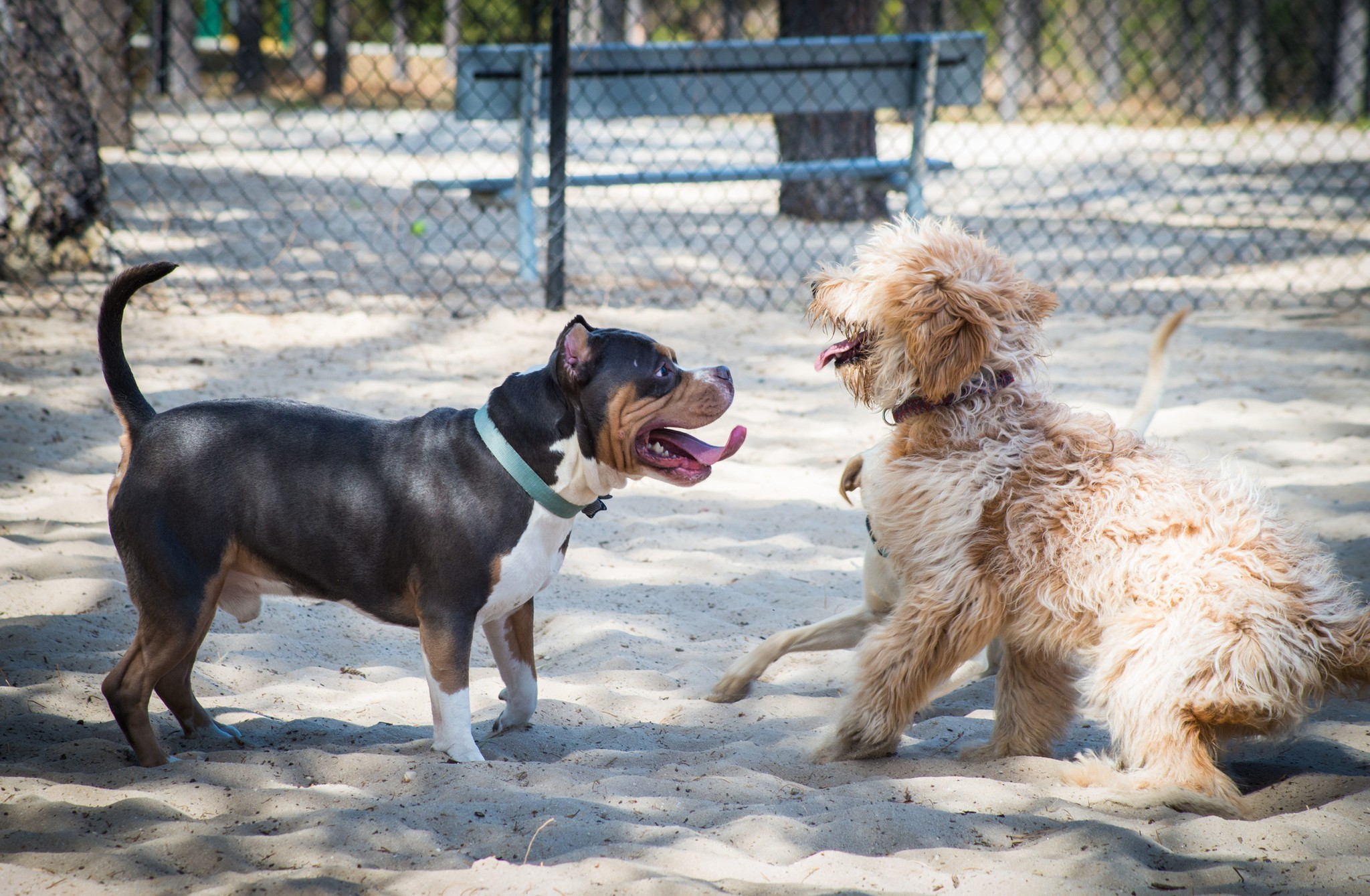 How to Avoid Danger at the Dog Park
