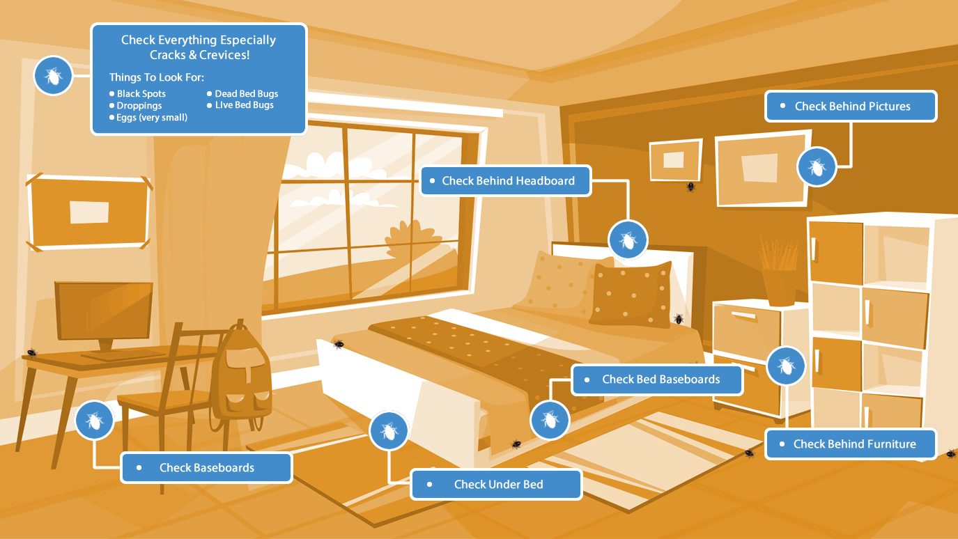 where to look for bed bugs