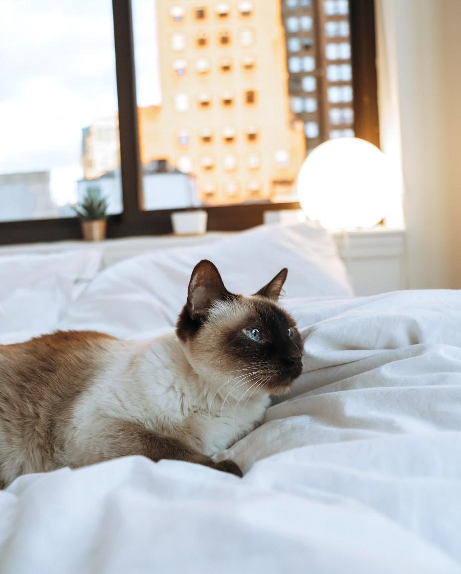 Chat et punaise de lit