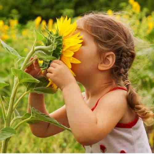 Girl Smelling Sunflower