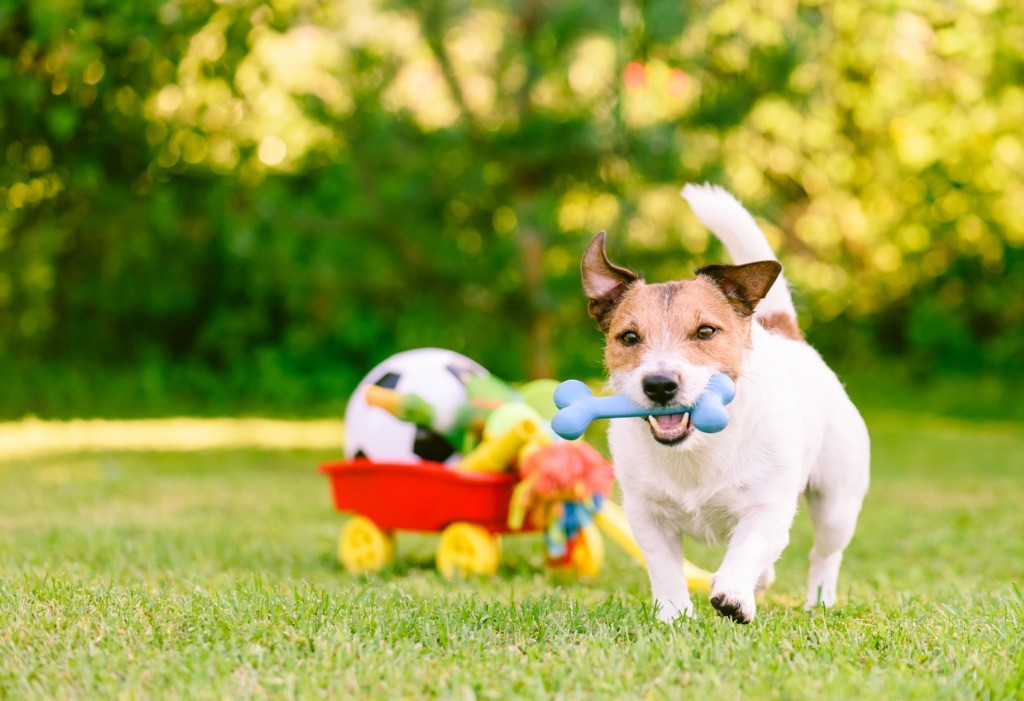 Choosing a Doggy Daycare That's Right for Your Dog