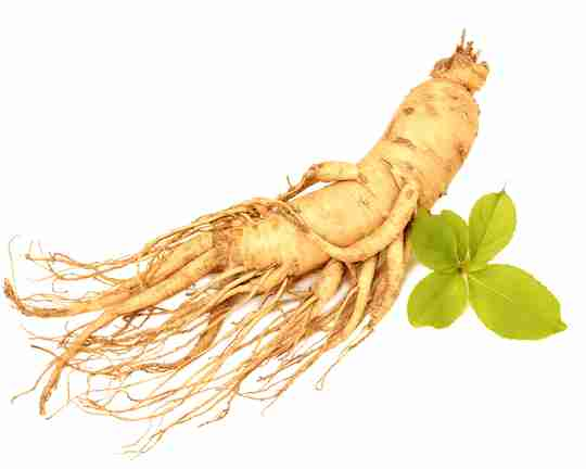 ginseng root with leaf on white background