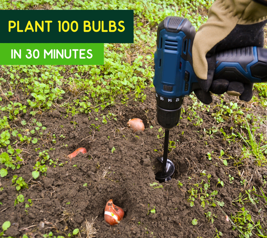Plant 100 bulbs in 30 minutes