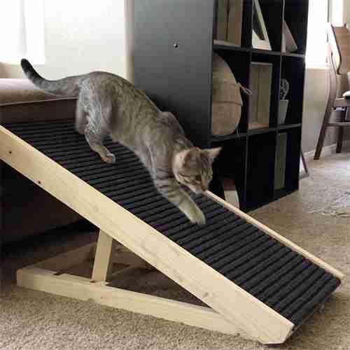 best cat ramp