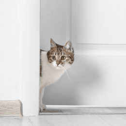 why does my cat not like closed doors?
