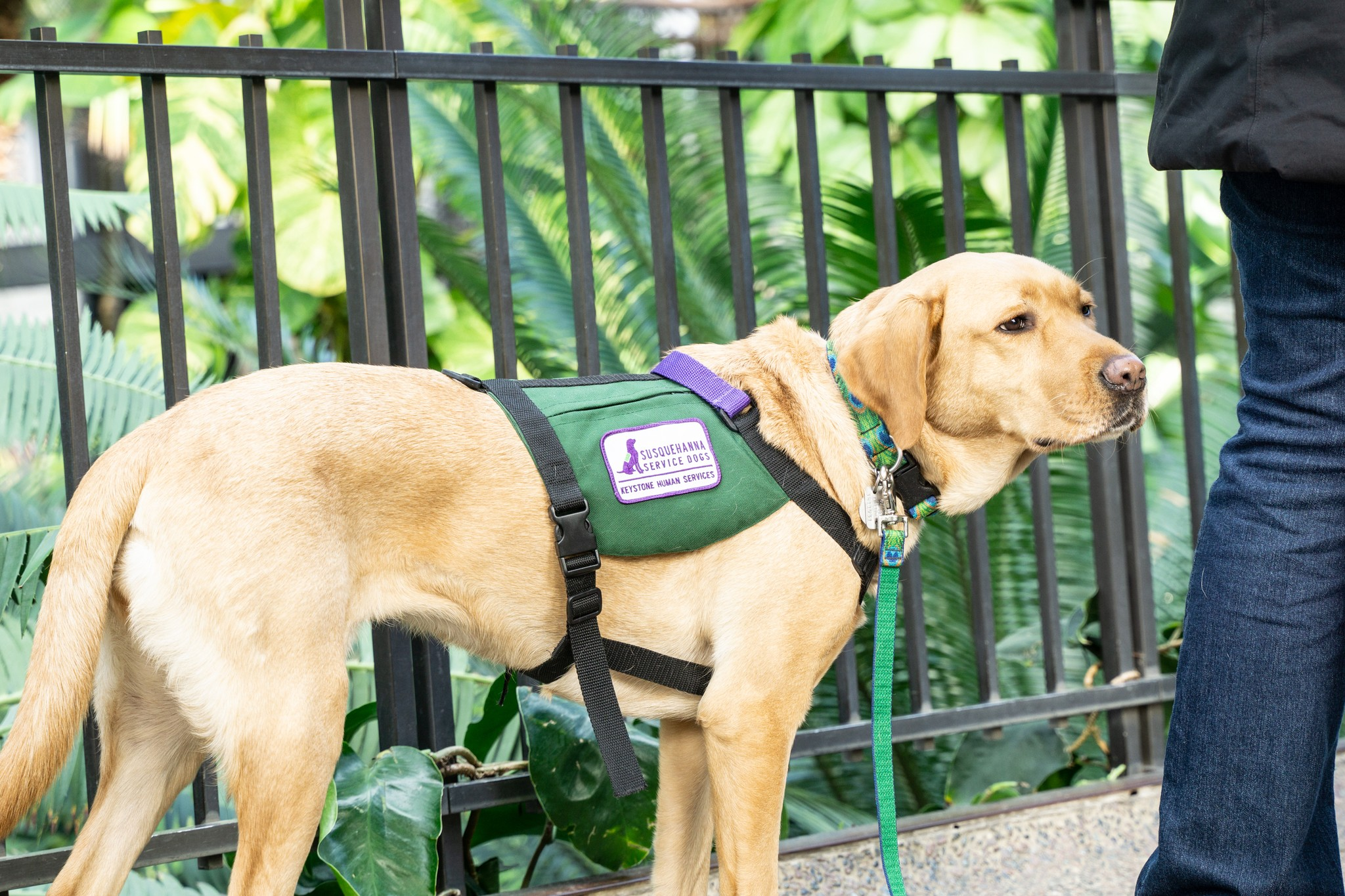 The Benefits Different Types of Service Dogs Offer